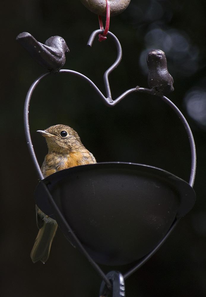 Robin-Love.jpg